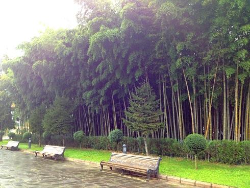 batum_bambu2