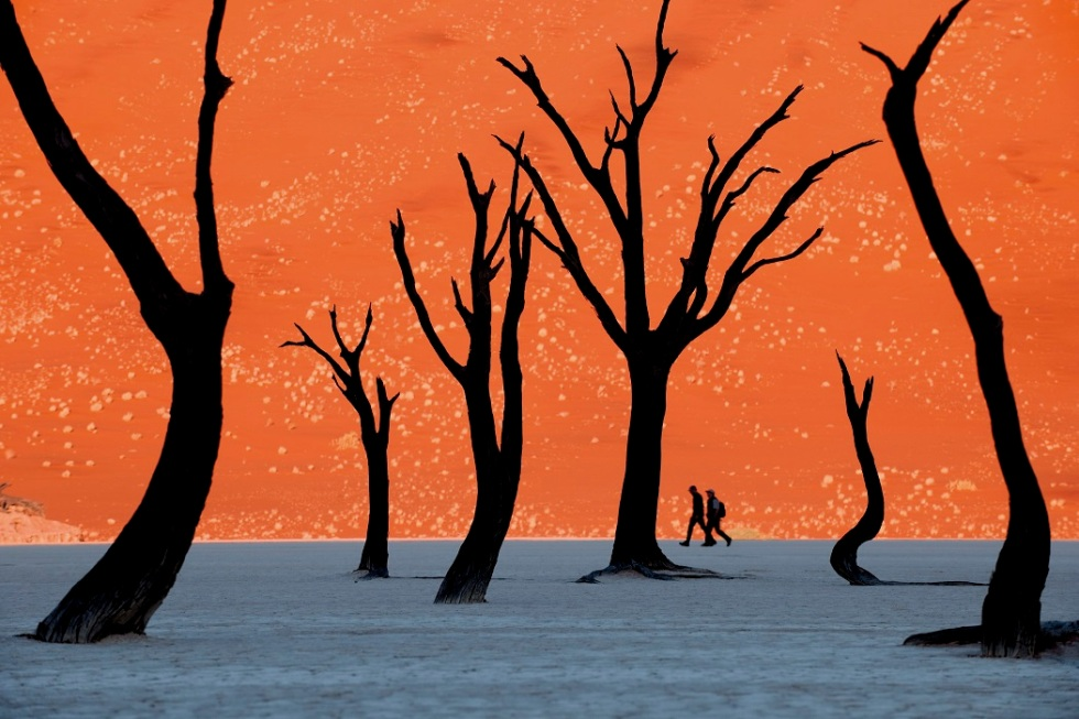 Dead camelthorn trees with hikers, Acacia erioloba, Sossusvlei, Namib-Naukluft National Park, Namibia